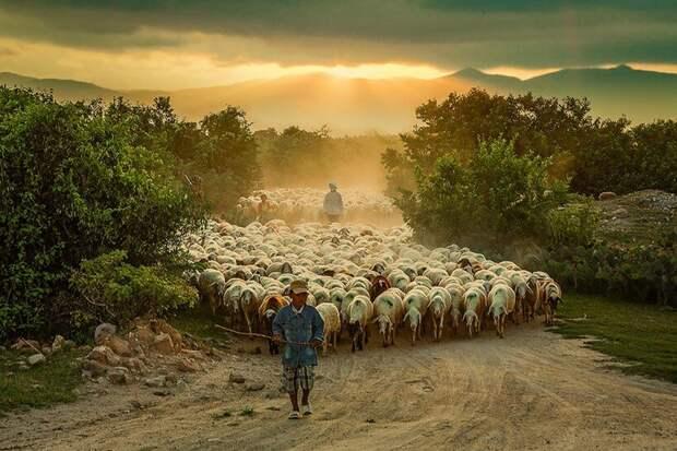 20 фотографий овечек, похожих на облака