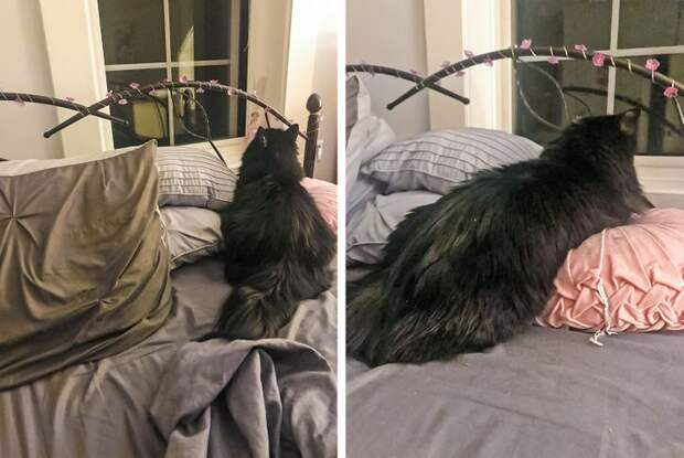 Избалованные коты, которые заграбастали власть в доме в свои лапы