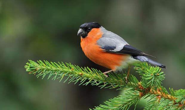 Birds_21 (700x416, 198Kb)