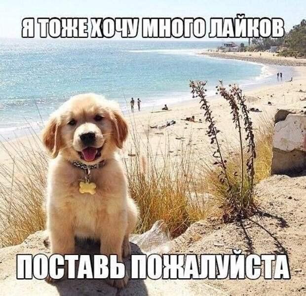 Позитивные фотографии и милые картинки для улыбки