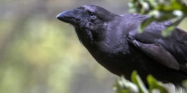 Почему в Австралии такие странные животные?