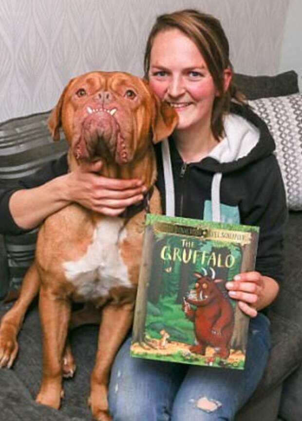Эту собаку назвали монстром, но кто-то выложил её фото в Сеть, и всё изменилось...