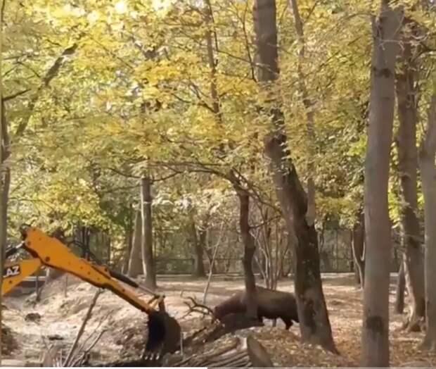 Олень вступил в схватку с экскаватором.