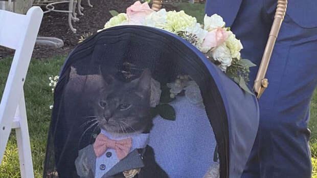 Кот с высокомерным видом вынес кольца на свадьбе и стал звездой Сети