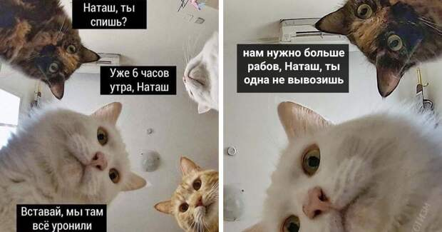 «Наташ, вставай, мы все уронили»: откуда взялись мемы про Наташу и котов, которые теперь буквально везде