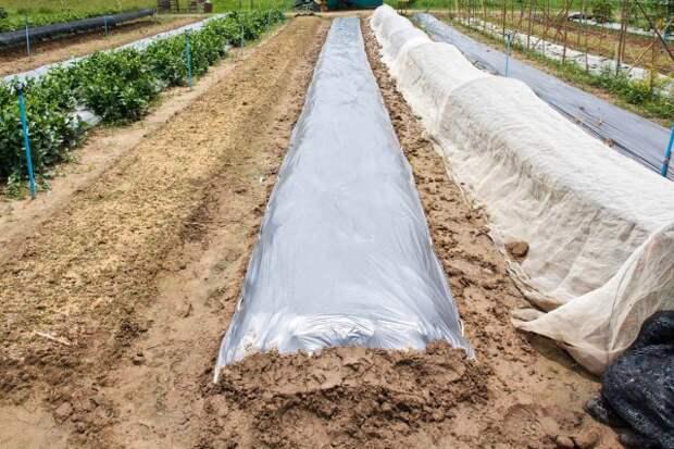 выращивание картофеля под укрытием