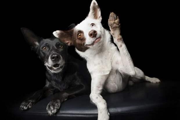 предпочтительная лапа у собак
