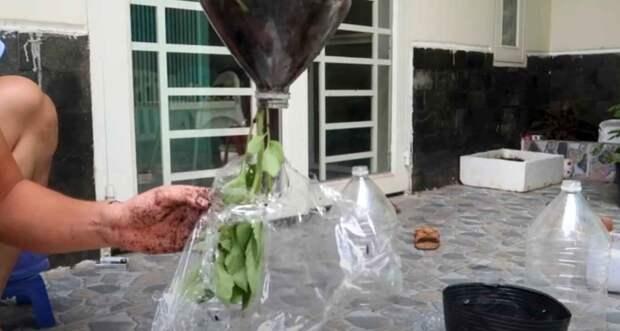 Идея для дачи: как сделать вертикальные грядки для выращивания томатов вверх тормашками