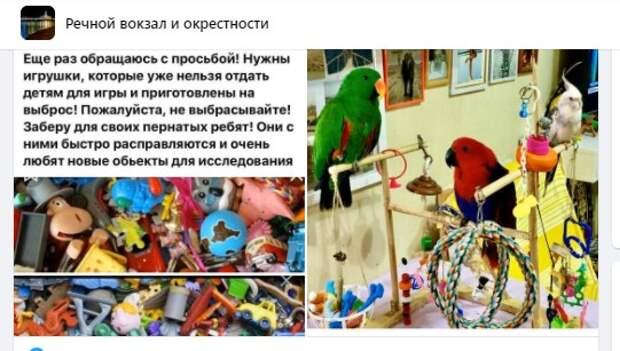 Активные попугаи в Левобережном занимаются утилизацией игрушек