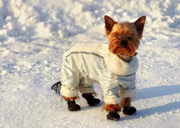 Нужна ли братьям меньшим зимняя одежда?
