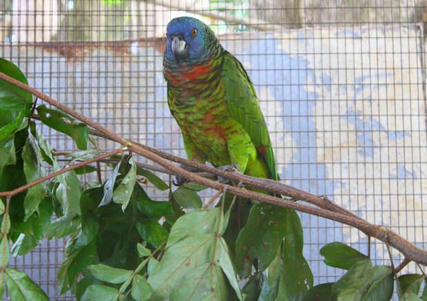 Самые крупные и красивые попугаи