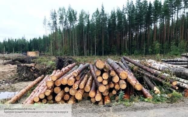 Репутация IKEA под угрозой: компания попала в историю с незаконной вырубкой лесов Украины