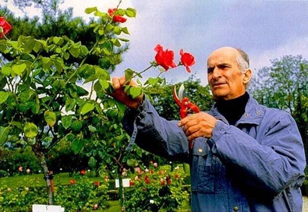 Любитель цветов Луи де Фюнес.