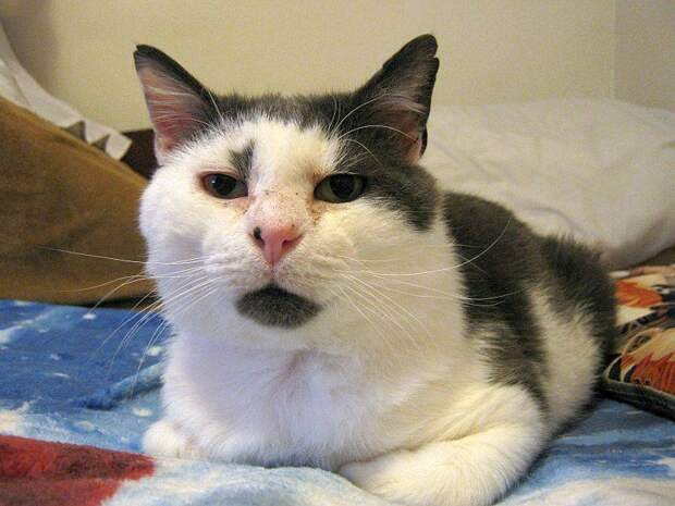 Этот кот 11 лет прожил на улице и израсходовал почти все свои 9 жизней