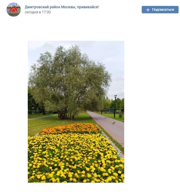 Фото дня: цветочный сквер по Карельскому бульвару