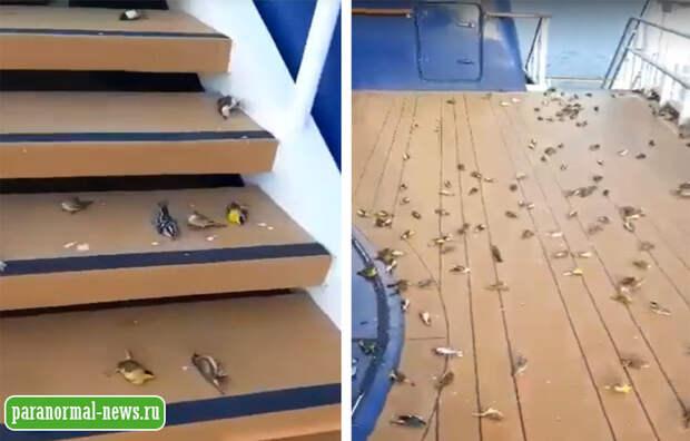 Сотни птиц упали замертво на палубу круизного лайнера