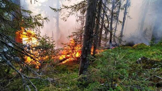 Названы регионы России с высоким риском природных пожаров