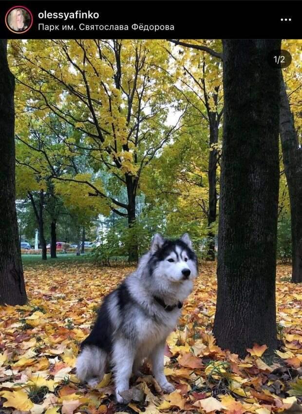 Фото дня: хаски в осеннем парке имени Святослава Федорова