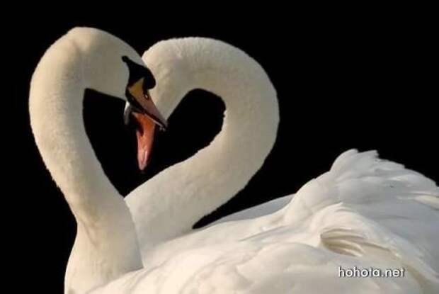 Звериная Любовь