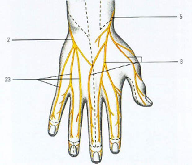 Немеет левая рука, пальцы – причины и лечение
