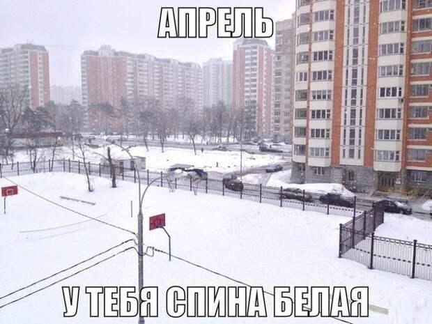 Интернет-тролли продолжали соревноваться в креативе апрель, весна, погода, снег, юмор