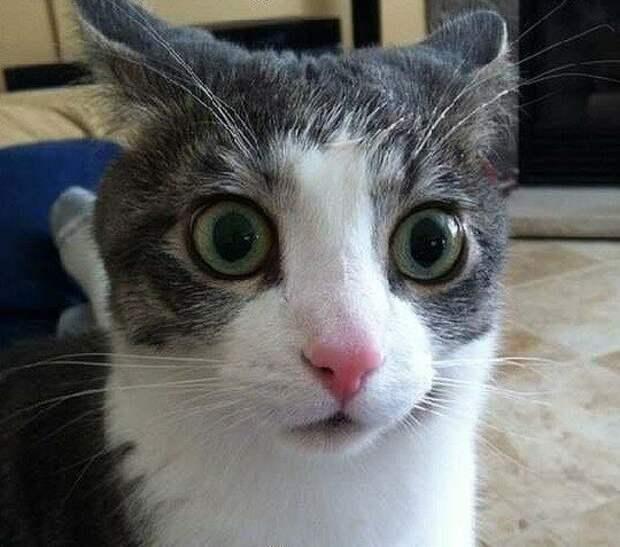 Чем у ваших котов пятки пахнут?  ## интересно, ## про котов, ## пятки, ## смешное