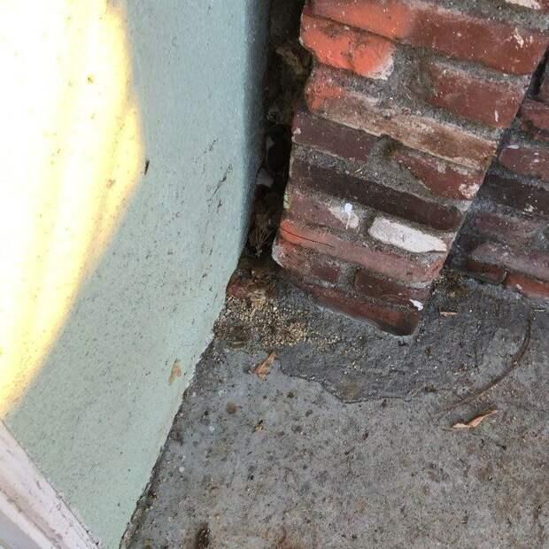 Зажатый между стенами комочек жалобно пищал, зовя на помощь
