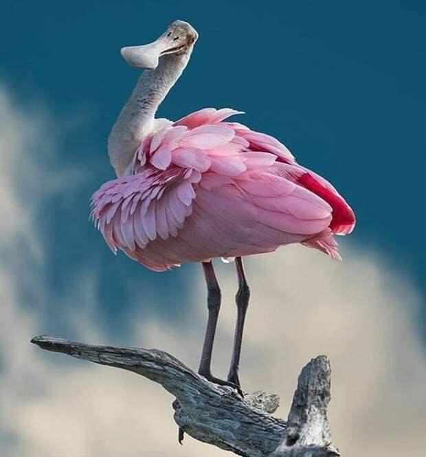 Животные, при создании которых природа явно экспериментировала с фотошопом