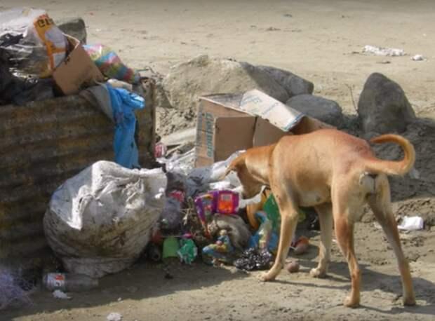 В Бразилии собака спасла новорожденного, которого мать выкинула в мусорку