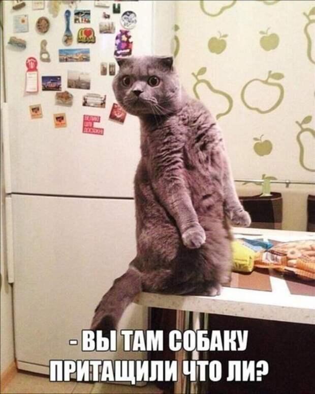 Фото забавных котов и котят со смешными подписями