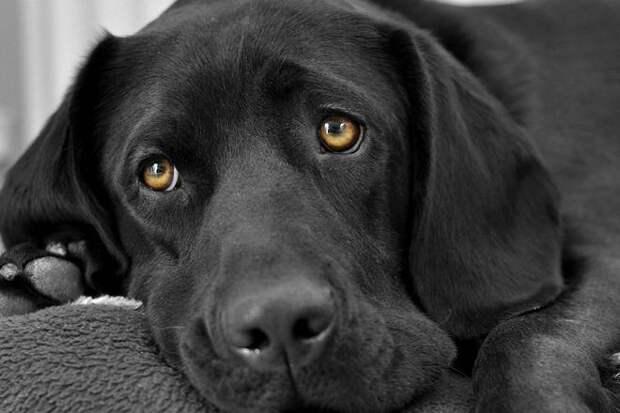 Почему собаки выглядят такими грустными