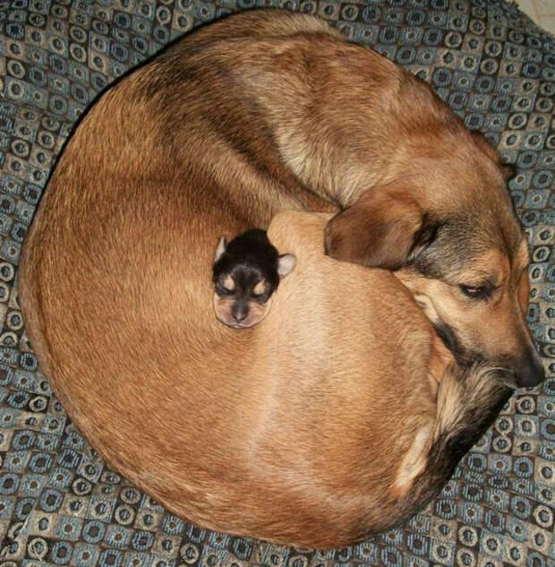 20 доказательств того, что собаки - самые милые животные в мире! Особенно маленькие...