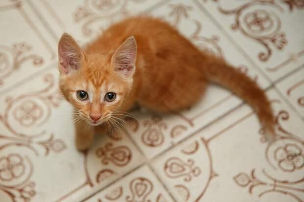 Мне никогда кошки под ноги на улице не бросались
