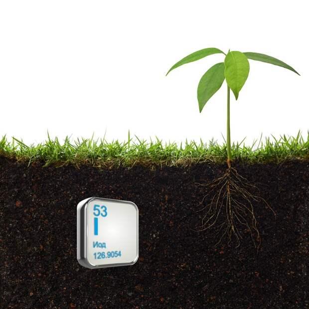 йод для полива растений