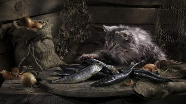 Натюркотик — жанр фотографии, достойный каждой кошки