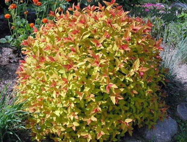 Вот какие низкорослые цветы посадить в клумбу, чтобы цвели все лето