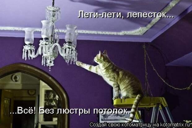 Котоматрица: Лети-лети, лепесток... ...Всё! Без люстры потолок.