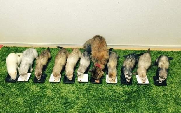 Я не кошка, я - хорек: трогательная история кошечки, которую воспитала семья домашних хорьков