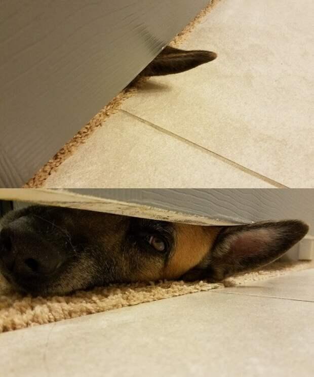 10. «Каждый раз, когда я иду в душ» домашний питомец, животные, позитив, прикол, собака, умора