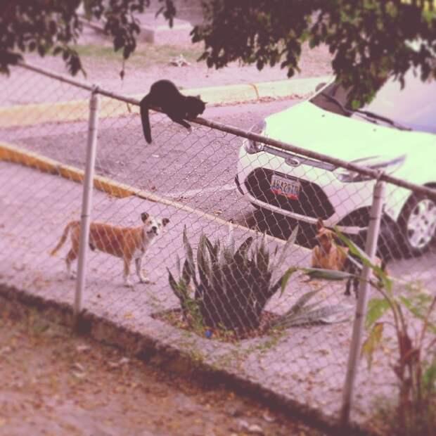 20 смешных фото животных, чей день явно не задался кошка, недовольная кошка, подборка, смешные животные, собака, юмор