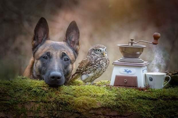 ТЕРЕМОК. Собака и сова друг без друга жить не могут