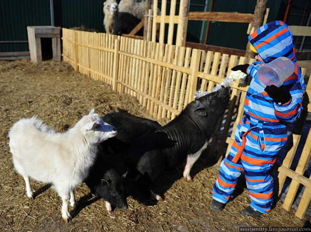 """Дети очень удивлены таким вниманием.  """"Чудесный"""", Семейный, зоопарк, уссурийск"""