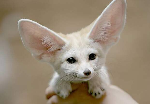 Факты о животных, которые заставят вас улыбнуться факты, живность, интересно, познавательно, позитив