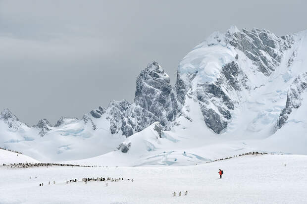 Антарктика: притягательная строгость красоты Севера