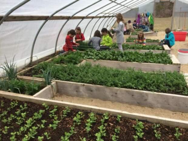 садоводство школьное образование: Экологическое воспитание, осознанное родительство