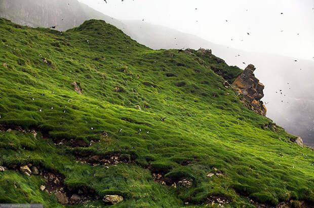 Фареры: остров птиц