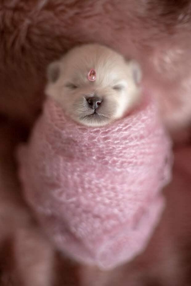 Эта фотосессия новорожденных щенков смягчит даже самое жесткое сердце