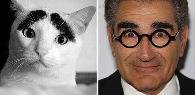 Выразительные глаза и брови - Юджин Леви вылитый кот животные, копии, юмор