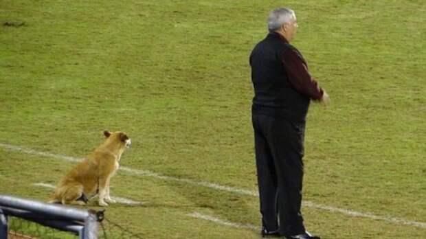 В Парагвае собака стала футбольным тренером