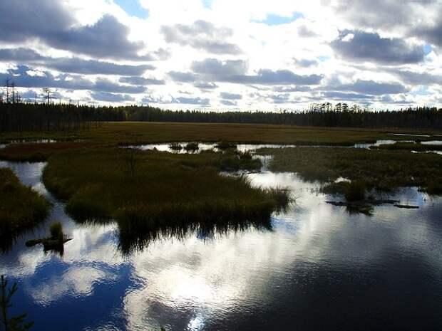Дух череповецких болот